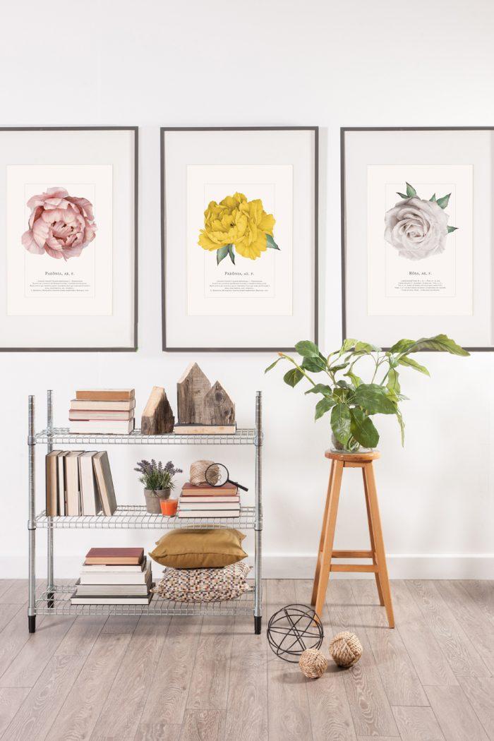 poster_fleur_paeonia_papermint_mariekke